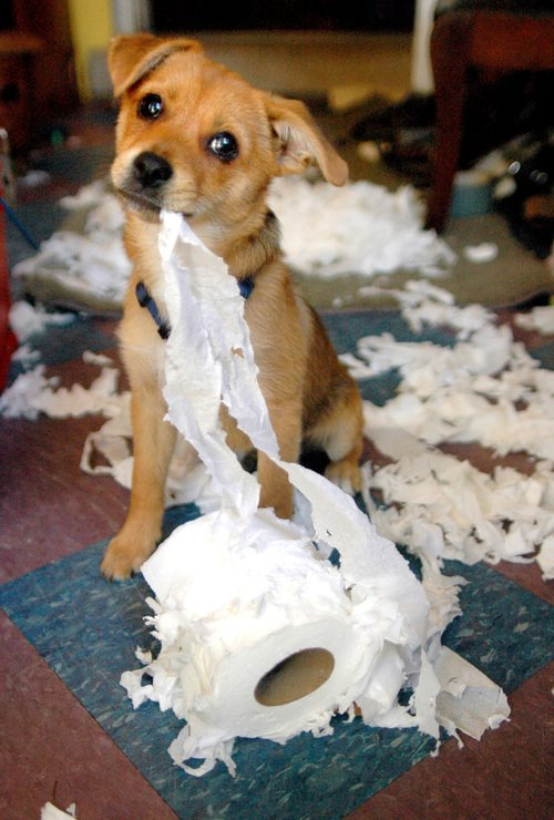 Cute dog tearing up toilet paper Found on to da loos