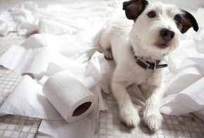 It's National Dog Day and National Toilet Paper Day so…