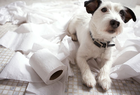 It\'s National Dog Day and National Toilet Paper Day so… – Green ...